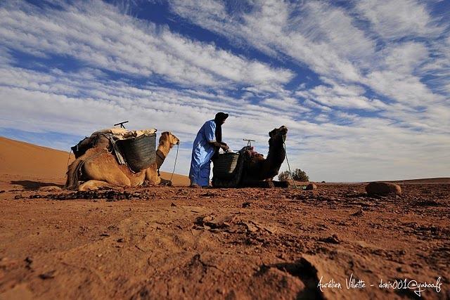 Sahara Amassakoul
